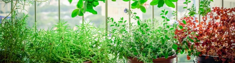 Agriculture urbaine et villes comestibles : l'avenir est-il sur les toits ?