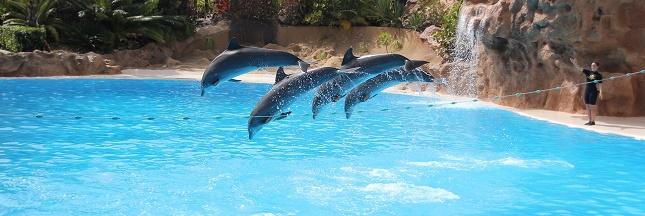 Les conditions de captivité des dauphins dans les parcs aquatiques vont être améliorées