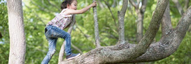 forêt enfants