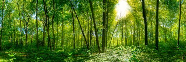 Investissement forestier: l'épargne est dans la forêt