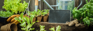 Sondage : Cultivez-vous un potager ?