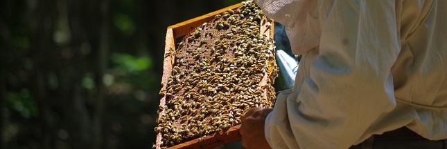 L'appel d'un producteur de miel mexicain contre les pesticides