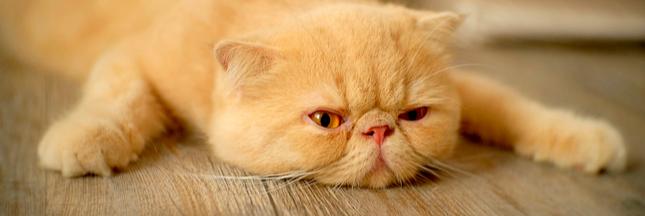Vivez-vous dans le pays le plus paresseux du monde?