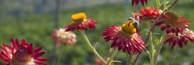 Pesticides: deux études confirment la nocivité des néonicotinoïdes