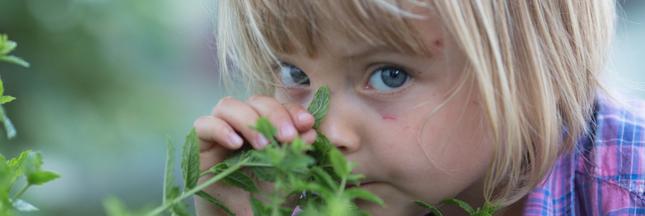 Jardinez et dégustez les herbes de l'été avec les enfants