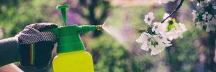 Vente de pesticides en libre-service : de nombreuses enseignes en infraction