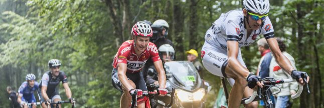 Des arbres centenaires condamnés pour le Tour de France