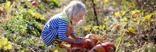 Supprimez les pesticides de votre jardin : les magasins Botanic les collectent