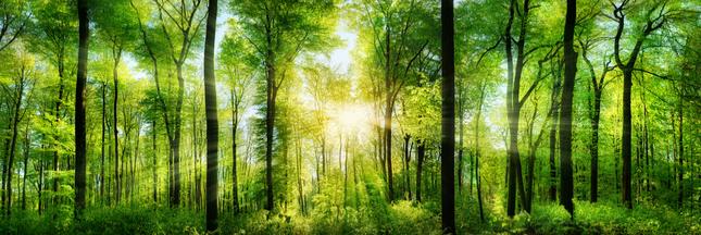 PEFC, FSC: suivez les labels pour encourager la production de bois durable