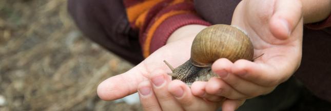 Un chef incite les cantines scolaires à servir des escargots aux enfants!