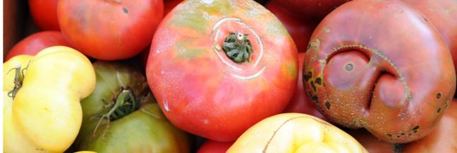 En Australie, la moitié des tomates cultivées n'atteint pas les consommateurs