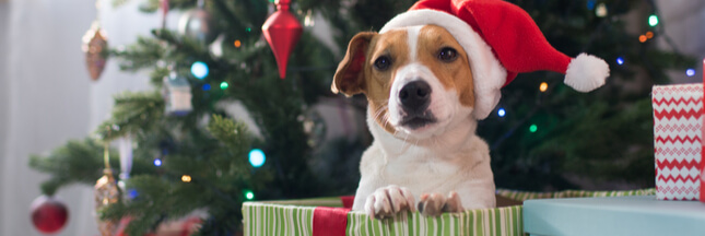 Sous le sapin, le Père Noël ne pose pas de lapin… ni de chiens!