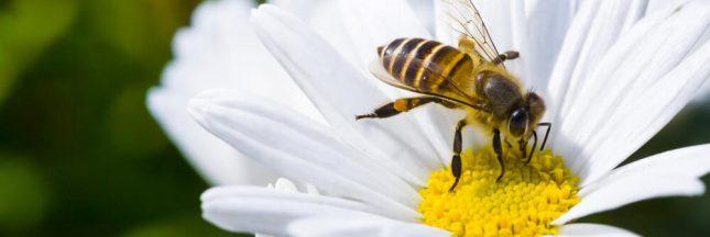 Déclin des pollinisateurs: une consultation publique est lancée