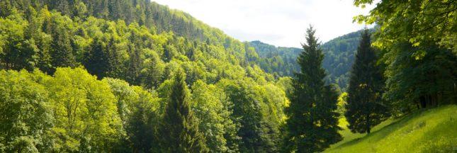 L'Angleterre va planter 50 millions d'arbres pour créer une gigantesque forêt