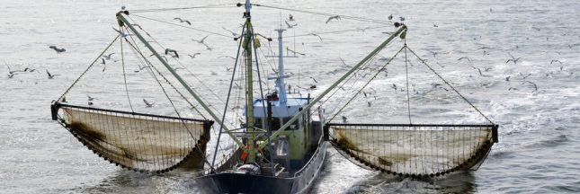 La pêche électrique définitivement interdite en Europe… en 2021