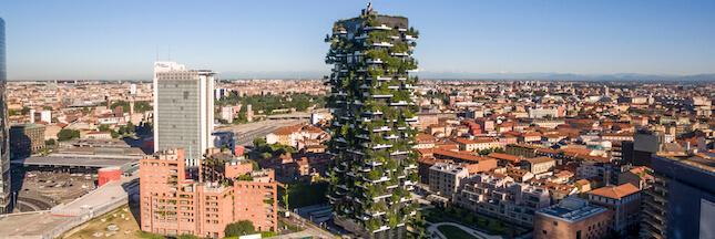 Urban Forestry: comme un arbre dans la ville…