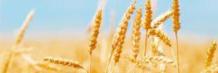 Monsanto rachète Pairwise Plants, une entreprise d'édition génétique