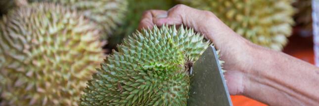 Le durian et la chauve-souris, un duo de choc en danger