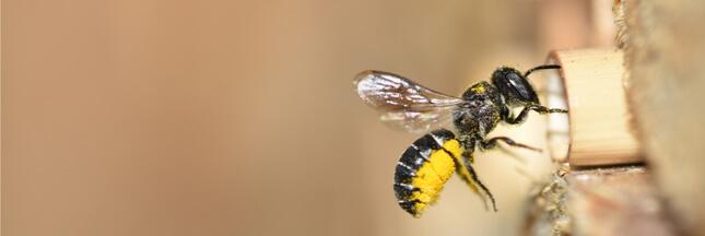 BeeHome: sauvez la biodiversité en adoptant des abeilles