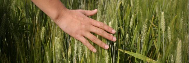 Règles pour l'alimentation bio: fini le diktat des firmes sur les semences paysannes!