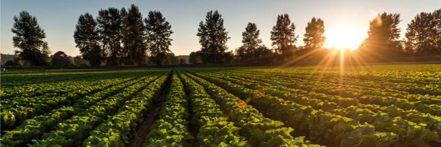 Des solutions pour un avenir sans engrais ni pesticides