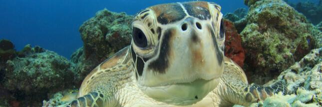 Australie: le gouvernement autorise la pêche industrielle dans ses réserves marines!