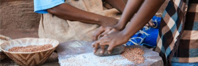 Millet et sorgho, des aliments pour la sécurité alimentaire des zones semi-arides