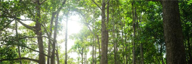 La pollution empêche les arbres de bien se nourrir