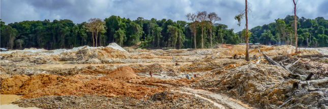 Déforestation: un terrain de foot perdu chaque seconde en 2017