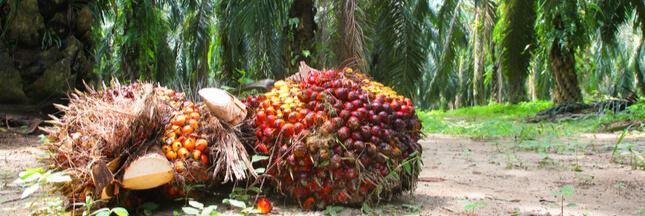 Pourquoi est-ce si difficile de se passer d'huile de palme?
