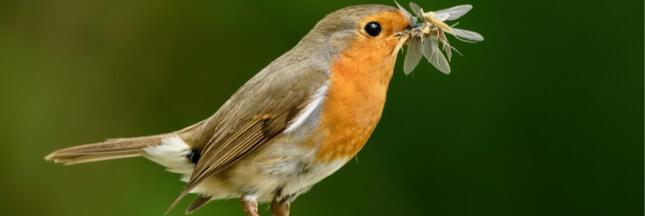 Les oiseaux consomment autant d'insectes que les humains mangent de viande et de poisson!