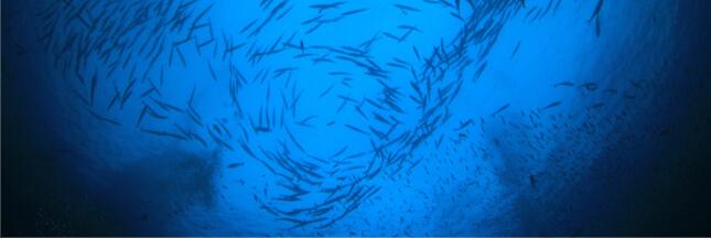Ouverture de négociations décisives sur la protection de la haute mer