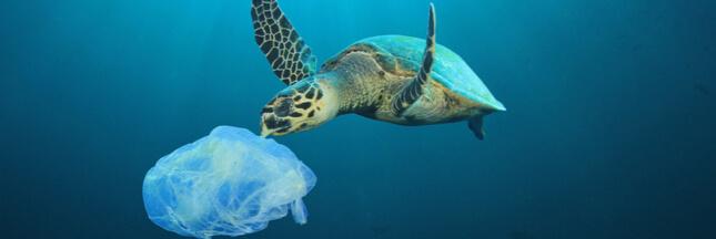 Plastiques, pétrole: les océans agonisent sous les déchets