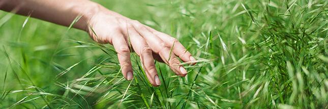 Comment semer un gazon naturel? Nos astuces écologiques