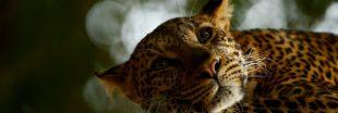 La nature dans le viseur des Wildlife Photographers 2018