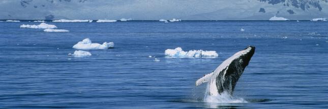 Une gigantesque réserve marine aurait pu voir le jour en Antarctique!