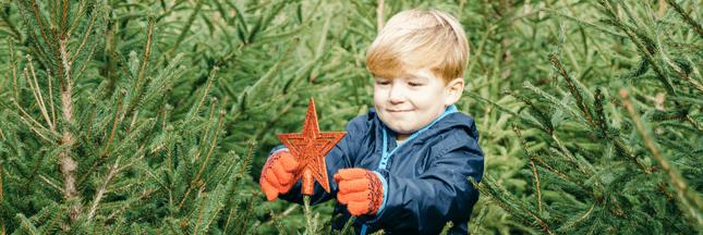 Quel sapin choisir pour un Noël plus vert?