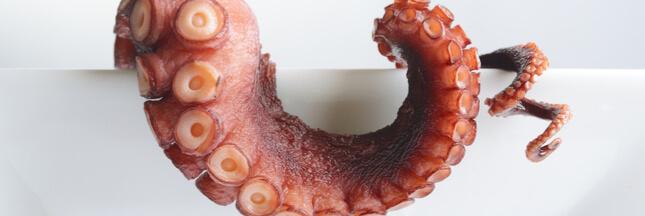 Faut-il manger les poulpes, calamars et seiches?