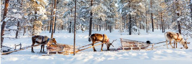 Quels seraient les autres animaux qui pourraient aider le Père-Noël…