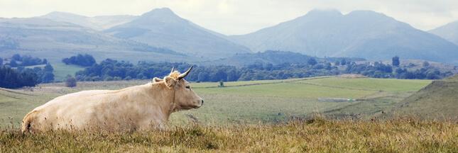 Au coeur des volcans d'Auvergne, une laiterie pollue-t-elle une rivière?