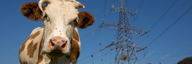 Les animaux d'élevage stressés par les rayonnements électromagnétiques