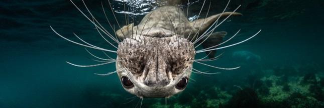 Découvrez les photos lauréates du concours Ocean Art Underwater