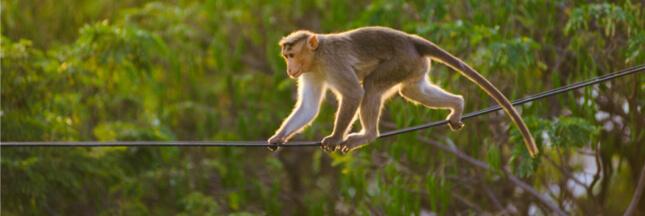 Risques d'électrocution: un danger croissant pour la biodiversité