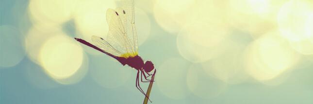 Réchauffement climatique: les libellules, un nouvel indicateur