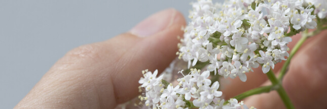 Soigner le stress par les plantes: lesquelles choisir?