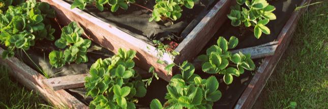 Avis aux gourmands: avec une pyramide de fraisiers, vous allez vous régaler!