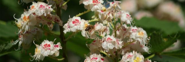 Les plantes mellifères qui aident abeilles et pollinisateurs