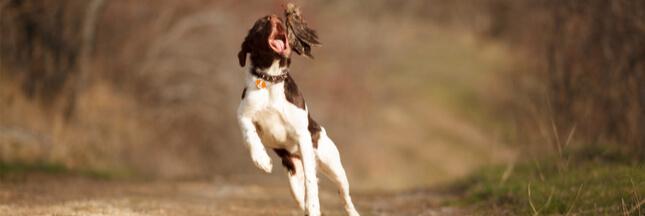 Tenir son chien en laisse pour participer à la protection de la biodiversité