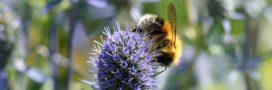 pollinisation abeille