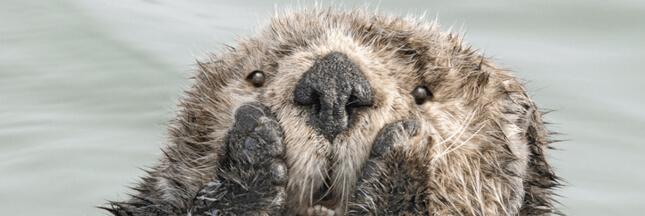 6 photos cocasses du Comedy Wildlife Photography 2019